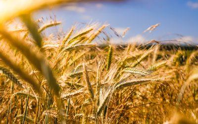 Contributi sui macchinari per le imprese agricole